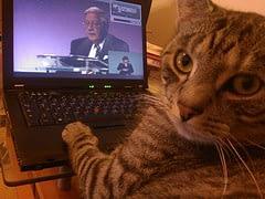 cat at laptop